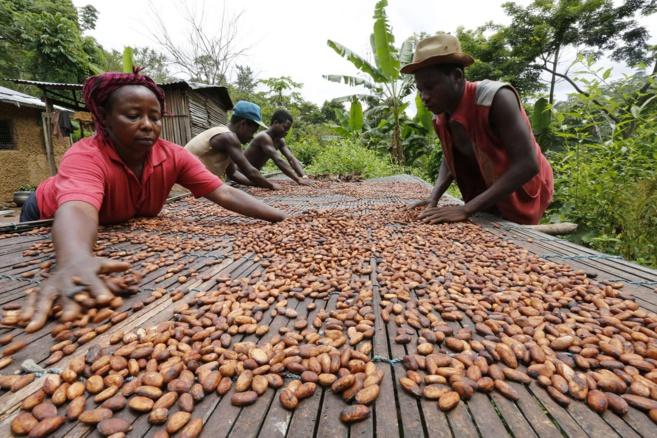 Dans le monde entier la filère cacao de luxe se développe.