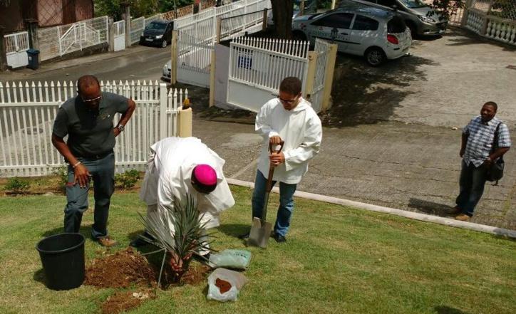Un palmier en souvenir du père Jean-Michel et de la première année d'épiscopat de Mgr Frère David Macaire.
