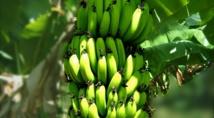 Résultats des examens 2016 de l'enseignement agricole : d'excellents résultats pour les filières scientifiques, technologiques et professionnelles agricoles