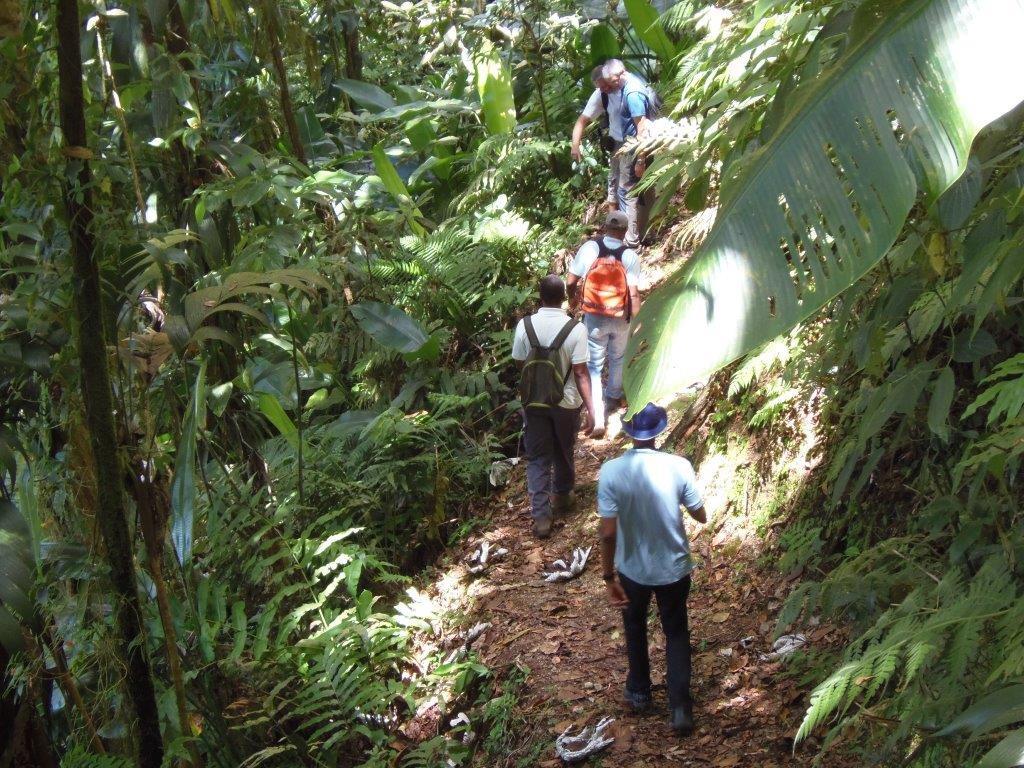 iMAGE Martinique Tourisme