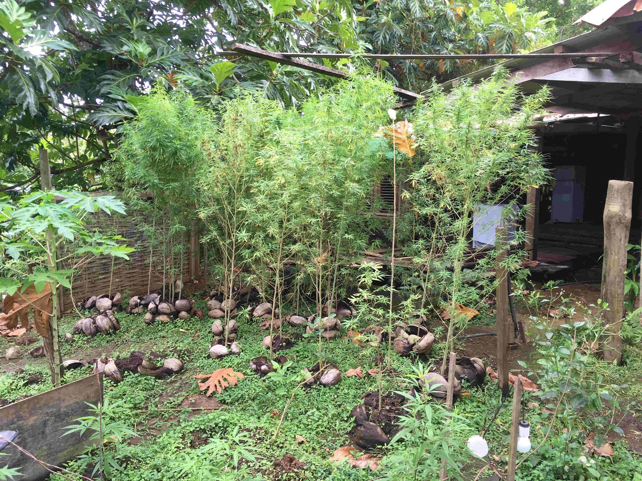 [FAITS DIVERS] Sainte-Marie : 40 pieds de cannabis découverts chez un particulier