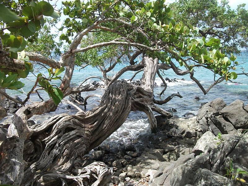 Martinique Patrimoine : Découvrons les secrets d'une histoire / Anse Figuier
