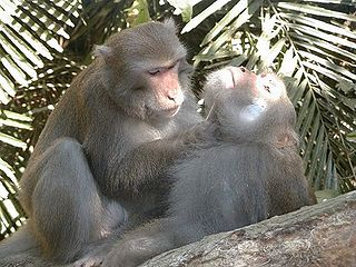 Relations sociales du macaque