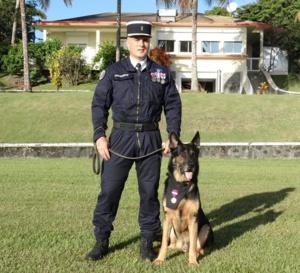 Goran...Un chien qui a fait preuve de qualités de courage, de dévouement et d'abnégation exemplaire !