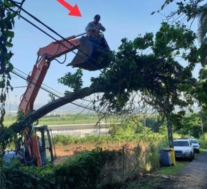 Ducos, un arbre tombe sur des lignes électriques et téléphoniques.