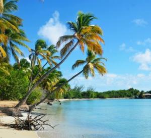 Toutes les plages de Sainte-Anne seront ouvertes à la baignade ce mardi .