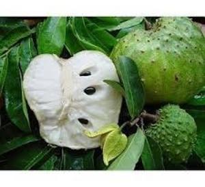 LA PENSEE DU JOUR:Le Corossol, fruit du Graviola un anticancéreux caché par l'industrie pharmaceutique ?