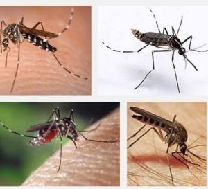 LU POUR VOUS: Voici l'histoire du Chikungunya par Dr J. MONTEZUME-BARNAY