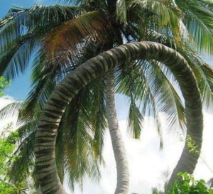 RÉACTION LECTEUR : UAG : Ni transformation, ni création mais tout simplement la continuité sans le G de la Guyane.
