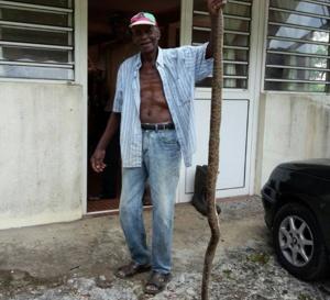 Un serpent de plus de 2 mètres tué à rivière lézarde au Gros- Morne