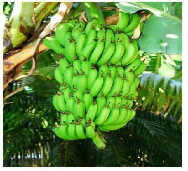 6 MOIS PAS UN JOUR DE PLUS POUR L' EPANDAGE AERIEN (Prefecture de la Martinique)