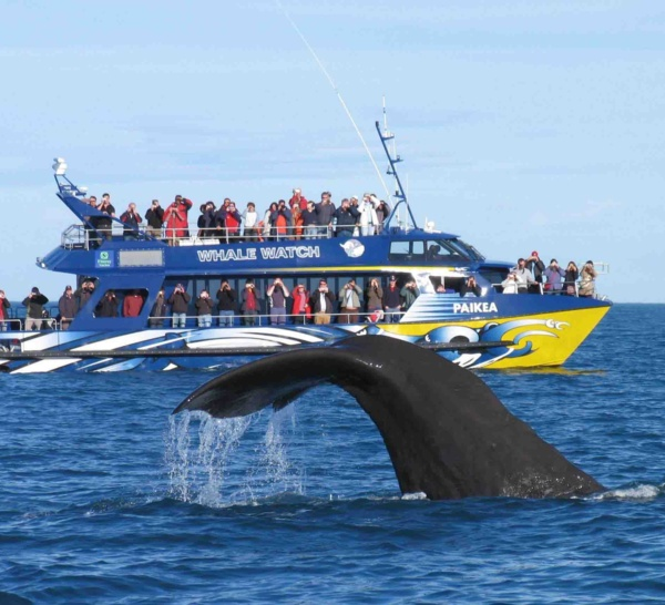 Surveillance de l'activité de Whalewatching
